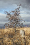 Tree, Field And Fence royalty free stock photography