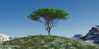 Tree in a field of flowers. 3d illustration of a tree in a field of flowers Stock Photos