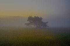 Tree in a field with fog Royalty Free Stock Photography