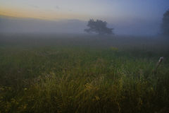 Tree in a field with fog Royalty Free Stock Photos