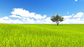 Tree field of grass and perfect sky landscape 3D rendering. Green Tree field of grass and perfect sky landscape 3D rendering Royalty Free Stock Image