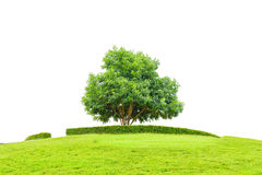 Tree and field of grass on small mountain for success concept isolated on a white background with clipping path. Royalty Free Stock Image