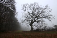 Tree on the field in the gray fog so cold Stock Photography