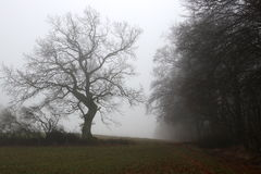 Tree on the field in the gray fog Royalty Free Stock Photos