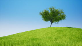 Tree on field green grass. Tree on field green grass stock video footage