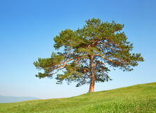 Tree in the field among the hills Stock Image