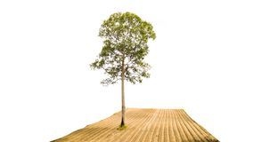 Tree in field isolated on white. With clipping path stock image