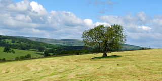 Tree and field landscape Stock Images