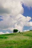 Tree in field. Lonely tree in the field Royalty Free Stock Photo