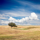 Tree in Field. Lonely tree on farm field with beautiful sky royalty free stock photography