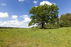 Tree in the field Stock Photos