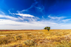 Tree on field Royalty Free Stock Photos