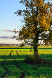 Tree in a field Stock Image