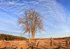 Tree in Field at Manassas Battlefield in Virginia Stock Photos