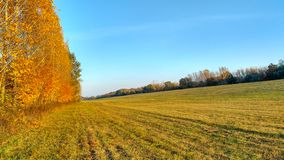 Tree, field, meadow and forest - blue sky. A field with trees on the edge royalty free stock photos