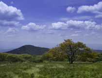 Tree in field near mountains royalty free stock photography