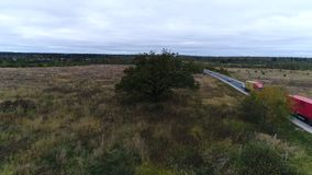 Tree in the field next to the road. Flight to a tree standing near the road. Autumn day, Russia stock video