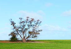 Tree in Field. Stock Photo