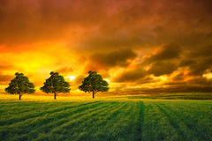 Tree in field and orange sky royalty free stock image