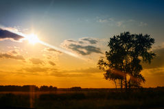 Tree in field and orange sky Stock Photography
