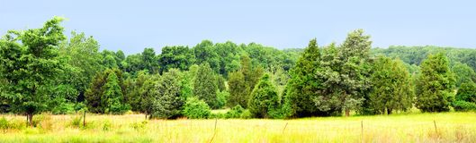Tree and field panorama. A panorama of wind-blown trees across a fenced field Royalty Free Stock Photo