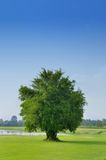 Tree, Field with pond and blue sky Stock Photography