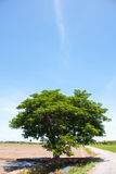 Tree and the field rice. On the blue sky in the thailand Stock Photos
