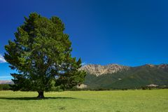 New Zealand On A Beautiful Summers Day Royalty Free Stock Images