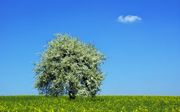 Tree in field royalty free stock images