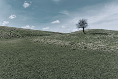 Tree. On field during spring Royalty Free Stock Images