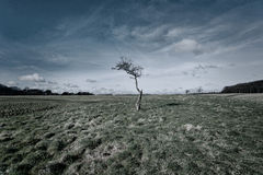 Tree. On field during spring Royalty Free Stock Image