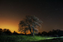 Tree in field and stars above. A tree in a field and a starry sky above it Royalty Free Stock Photos