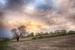 Tree and field at sunrise in early spring. Cloudy sky Stock Photography
