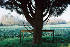 Tree in a field with table Stock Photos