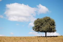 A tree in the field under cloud and blue sky. A lonely tree in an autumn field under blue sky with clouds stock photo