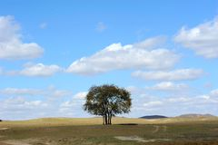 A tree in field under sky and clouds Stock Photo