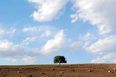 A tree in field under sky and clouds Royalty Free Stock Photos