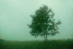 Tree in the field through the wet window Royalty Free Stock Photography