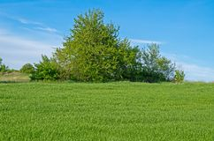 Tree in field Stock Images