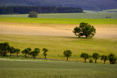 Tree in fields Stock Photography