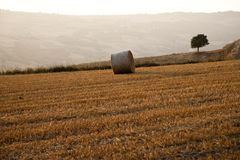 Tree and a Fields grain with bale Royalty Free Stock Photography