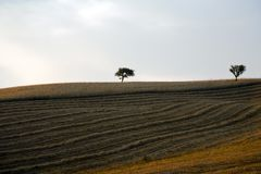 Tree and a Fields grain with bale Royalty Free Stock Image