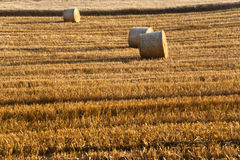 Tree and a Fields grain with bale Stock Photography