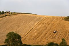Tree and a Fields grain with bale Royalty Free Stock Images