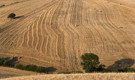 Tree and a Fields grain with bale Royalty Free Stock Photos