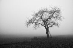 Tree in the fields. Lonely tree in the fields on a foggy November morning Stock Photos