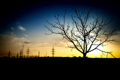Tree in the fields. Tree in the middle the fields on a background sunset Royalty Free Stock Photos