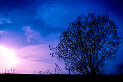 Tree in the fields. Tree in the middle the fields on a background sunset Royalty Free Stock Image