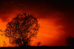 Tree in the fields. Tree in the middle the fields on a background sunset Stock Photography