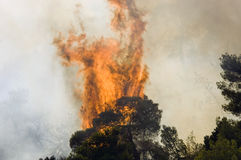 Tree on fire Stock Photos